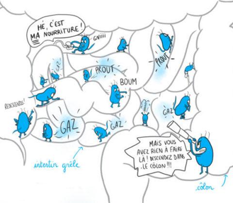 Le SIBO, ou quand le microbiote part en sucette ! ©Chloé Romengas pour les Éditions G. Trédaniel