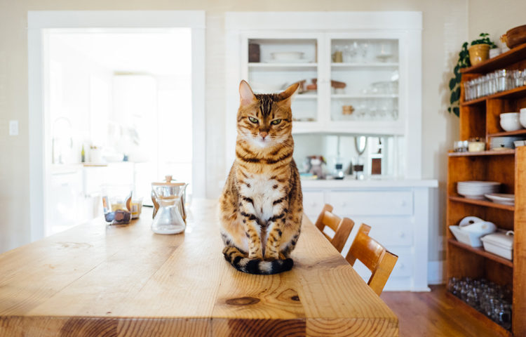 A la recherche d'un Airbnb sans gluten ©Paul