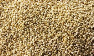 Fonio, céréale sans gluten qui remplace la semoule / 1
