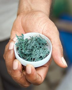 Spiruline, micro-algue mais superaliment sans gluten ! / 2