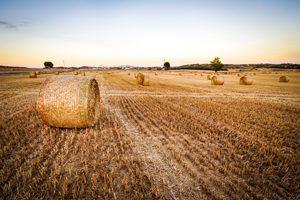 Dextrose, glucose, amidon de blé peut-on en manger ? ©Peter Kleinau