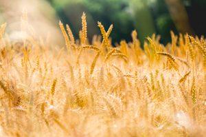 Dextrose, glucose, amidon de blé peut-on en manger ? ©Stephen Radford