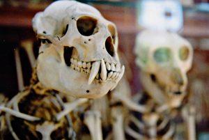 L'ostéoporose chez les cœliaques, aïe aïe aïe ! ©Jush