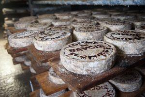 A la découverte du fromage vegan ! ©Agence Producteurs Locaux - Damien Khün