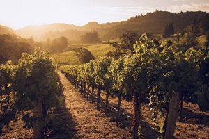 Les vignes de la Napa Valley où aller lors d'un trip sans gluten en Californie ©Matthias Klappenbach