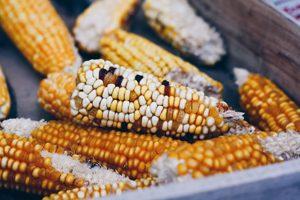 Maltodext-quoi ?! ©Emre Gencer - Malt sans gluten, est-ce que ça existe ?