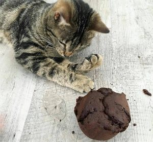 Le bon plan pour des courses sans gluten avec Genius - Le chat de ©charlotterecoq préfère les muffins Genius !