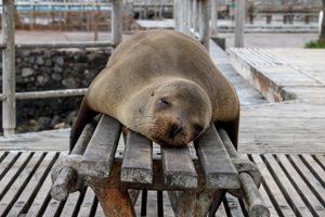 Que faire quand on mange du gluten par accident ?Vous la méritez cette sieste ! ©Jackman Chiu