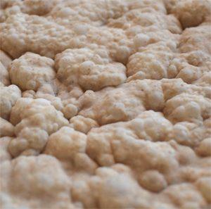 Est-ce qu'il existe du levain sans gluten ? En pleine fermentation @camiauvilaferreyra