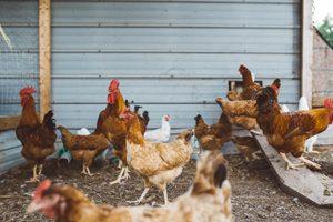 Le régime Seignalet pour les sans gluten ? ©Brooke Cagle