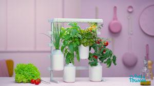 Des idées pour un cadeau de Noël sans gluten ! Le modulo de ©Prêt à Pousser