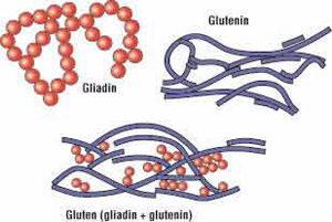 Qu'est-ce que la gliadine ? ©Clinical Education